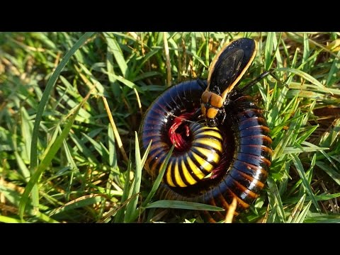 Poor Millipede Didn't Have A Chance!