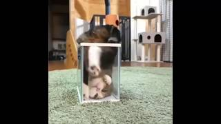 funny video 2018 funny video with animal