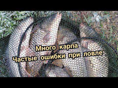 Снасти на речного карпа.Как ловить карпа на реке Днестре и Турунчуке.