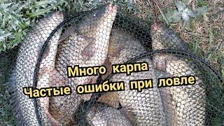 Снасти на речного карпа Как ловить карпа на реке Днестре и Турунчуке