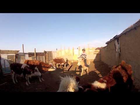 Film Kazakhstan 1