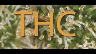 Sobre el TCH del cannabis