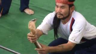 Snakes cobra show  Part 2