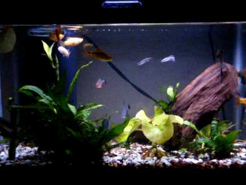 5 gallon community fish tank youtube for Youtube fish tank