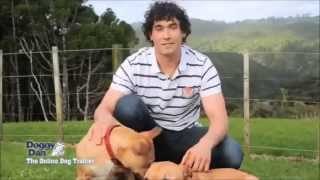 How To Train A Dog - Interview With A Top Dog Trainer
