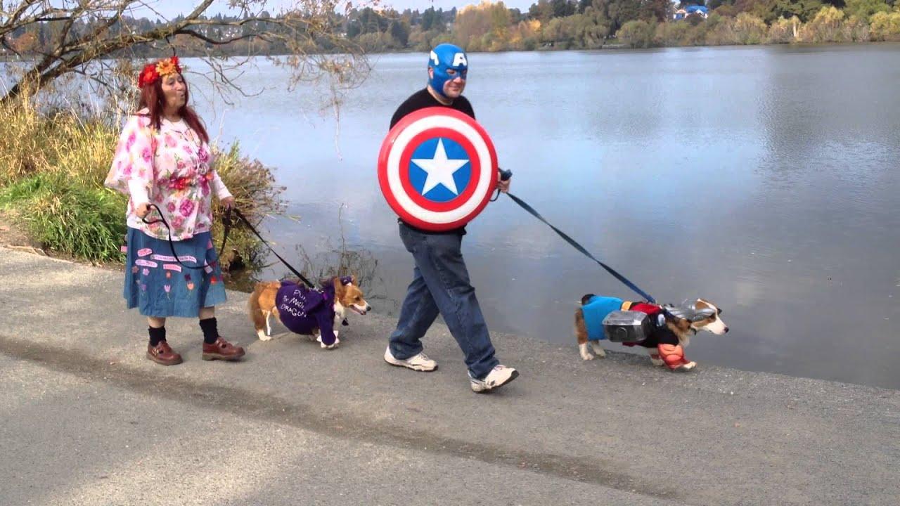 thor corgi walked by captain america 2013 corgi costume walk around green lake youtube