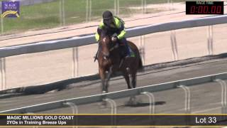 Lot 33 - 2YOs in Training Breezeup Thumbnail