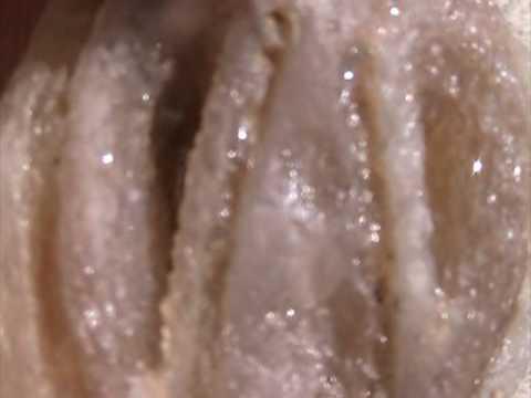 alien crystal skull fossil