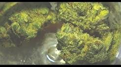 Florida Medical Cannabis (Trulieve - TruFlower Bubble Gum Review)