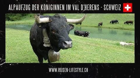 Alpaufzug der Königinnen im Val D'Herens - Schweiz/Suisse/Switzerland reisen-lifestyle.ch