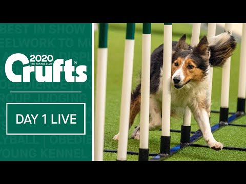 Day 1 Live | Crufts 2020