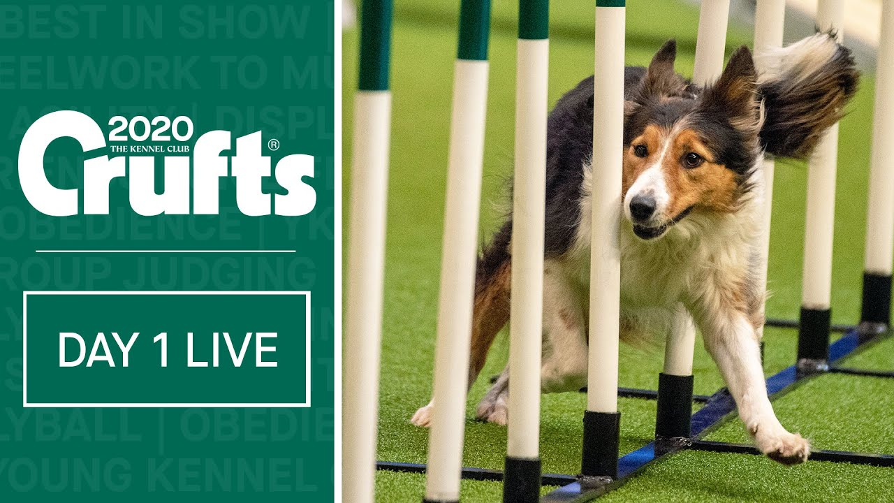 Day 1 Live Crufts 2020 Youtube