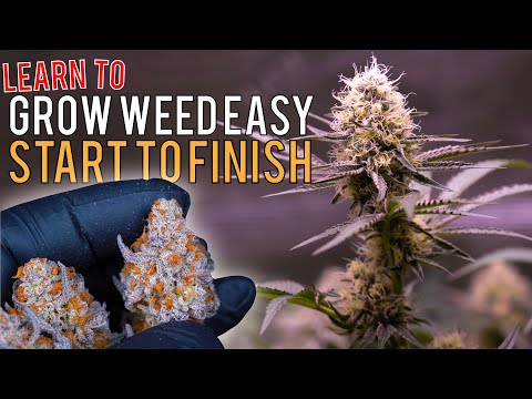 """GROW WEED EASILY FROM SEED TO HARVEST IN """"SUPER COCO MIX"""" JUST ADD WATER! CRAZY PLANT TRANSFORMATION"""