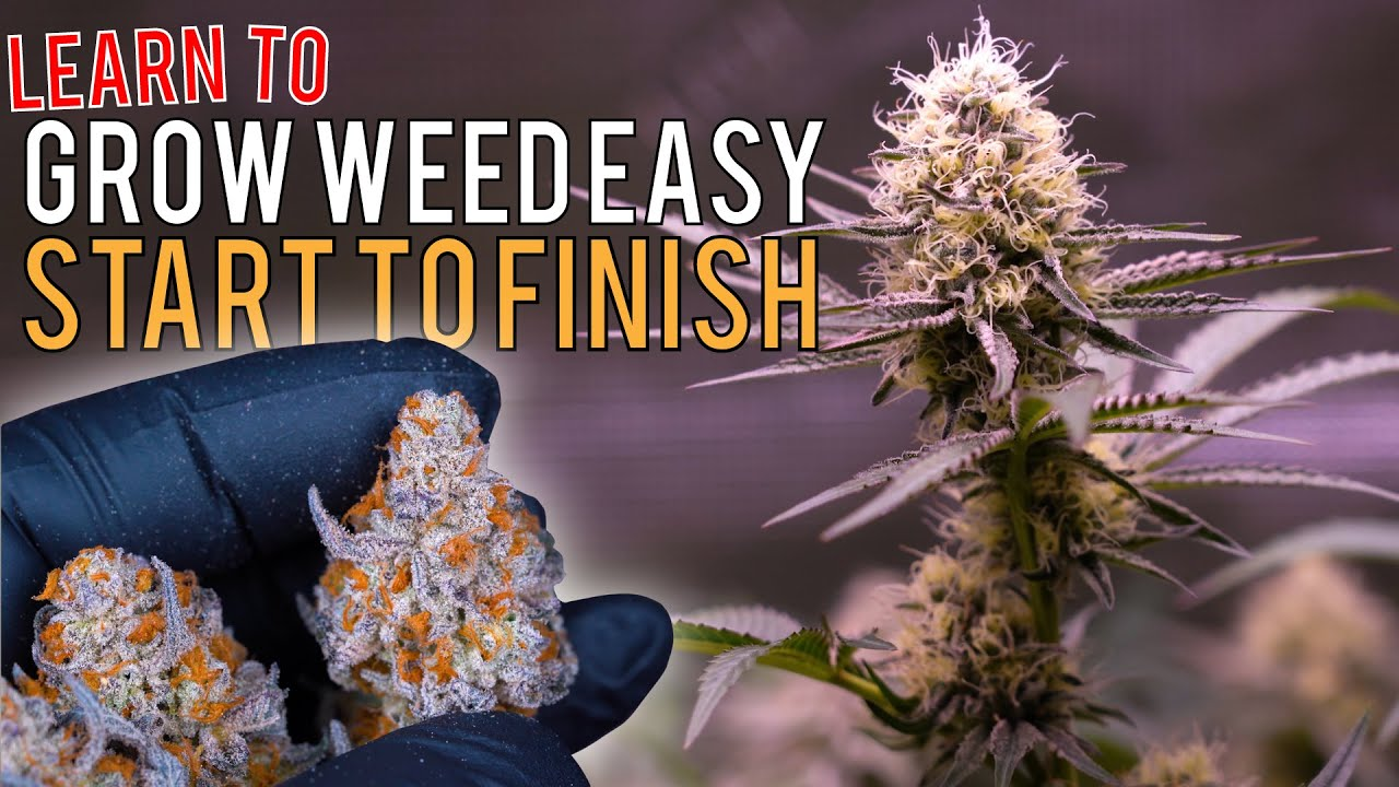 """Download GROW WEED EASILY FROM SEED TO HARVEST IN """"SUPER COCO MIX"""" JUST ADD WATER! CRAZY PLANT TRANSFORMATION"""