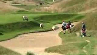 Sheep - Irish Course at Whistling Straits