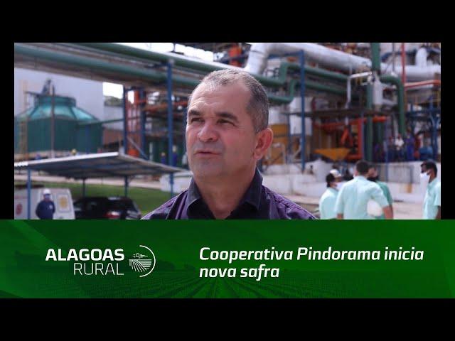 Cooperativa Pindorama inicia nova safra de cana-de-açúcar em Alagoas