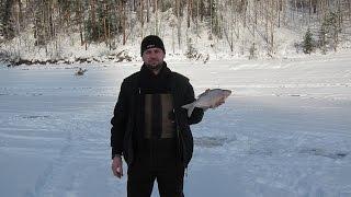 Залив Шумиха Январь 2017 Зимняя рыбалка.