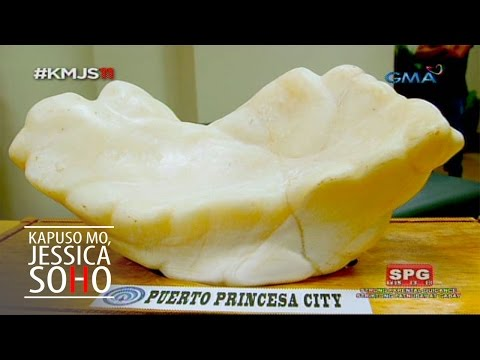 Kapuso Mo, Jessica Soho: The giant pearl of Puerto Princesa