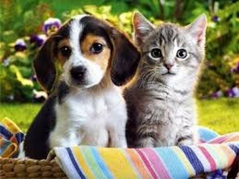 Funny cats and dogs, not really friends) - Funny animal compilation #