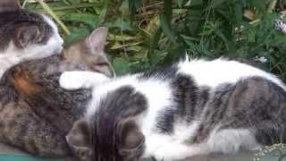 Кошачье семейство: одной скамейки мало
