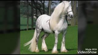 Красивые картинки про лошадей