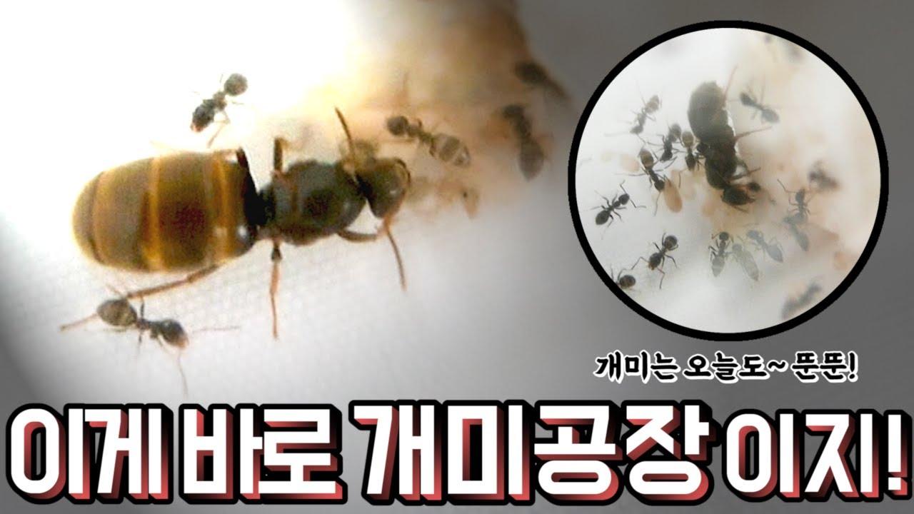 [모아이] 혹시나 이 개미들이 탈출하면 정말 큰일 나요! T_T