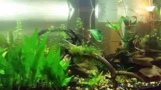 How to grow live plants in an aquarium (EASY)