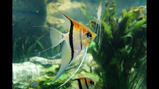 аквариумные рыбки, обзор цен в зоомагазине