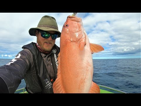 The Perfect Morning. Epic Weather & Hungry Reef Fish @ Swains Reef