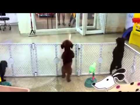 Excited puppy spots its owner video