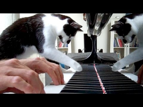 Heart and Soul piano duet for cat and human
