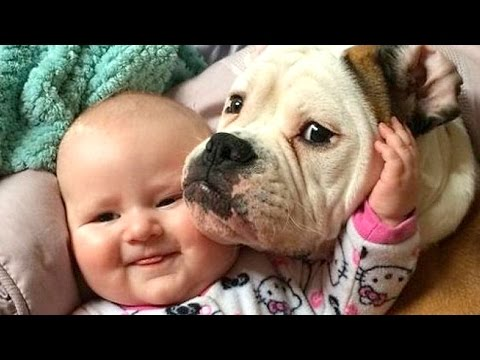 Babies Laughing at Dogs Compilation NEW