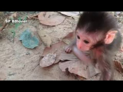 Life Heather Part 5 Baby Monkey Climb On Camera Man
