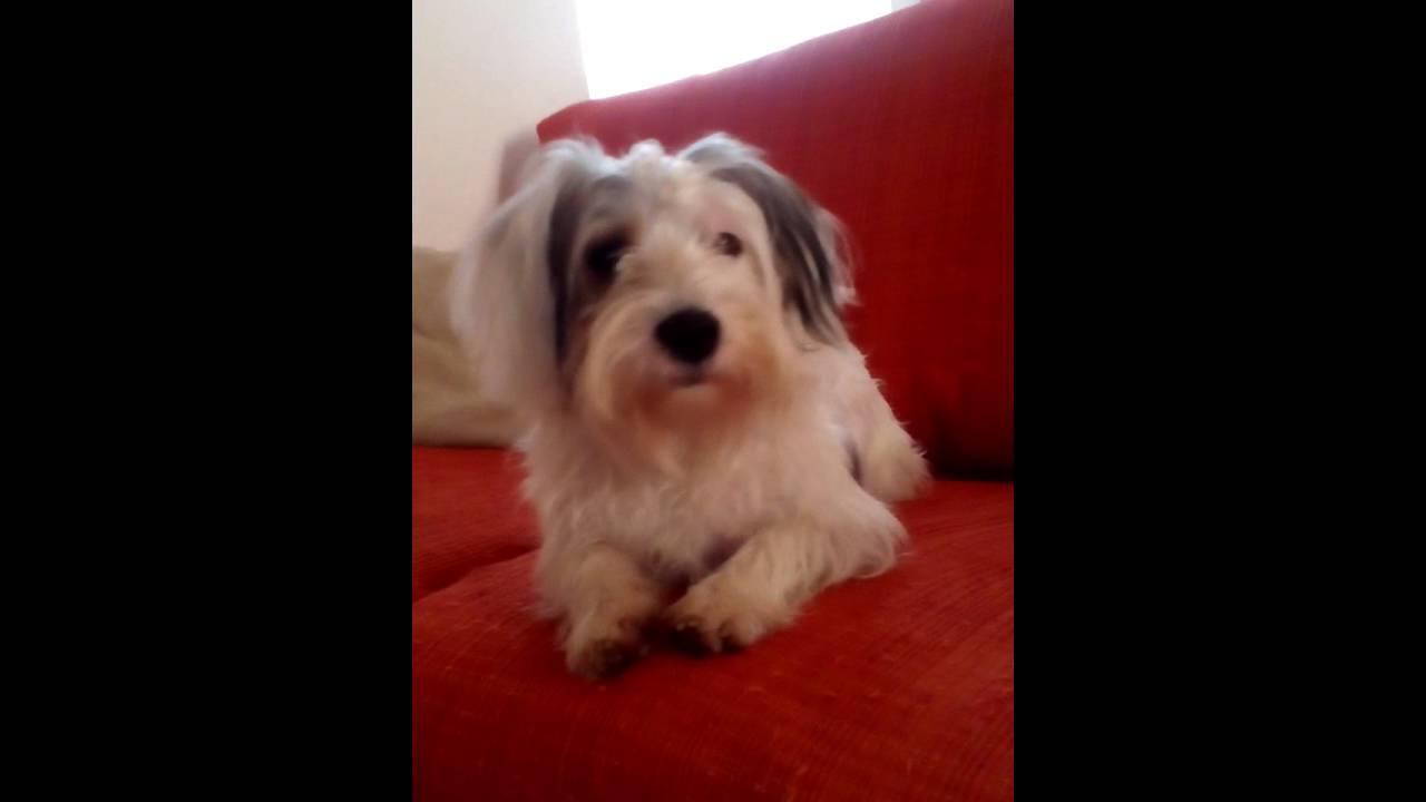 Il mio cane fa la pipi sul divano youtube - Pipi sul divano ...
