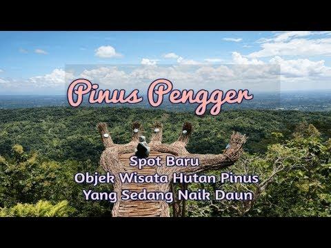 Spot Wisata Baru Hutan Pinus Pengger  | Yogyakarta Tourism Spot