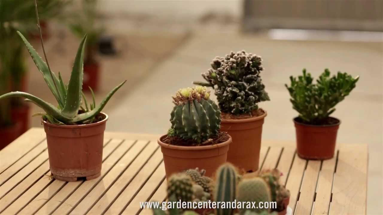 Video consejo 5 los cactus y plantas suculentas youtube for Tipos de cactus y suculentas
