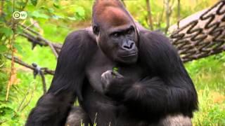 Reportajes y documentales: El zoológico ideal | Reportajes y documentales
