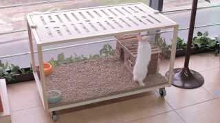 Все О Домашних Животных: Эко-клетки - Новый Тренд