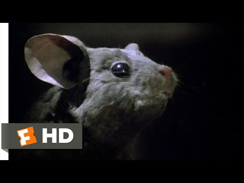 The Witches (8/10) Movie CLIP - Good Lord (1990) HD