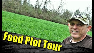 Food Plots for Deer: Cheap Tractor Supply Oats (Update)