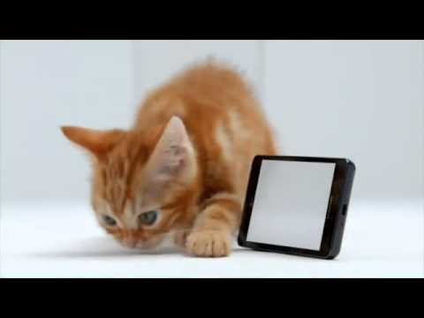 Celluloco.com Presents:   Samsung Infuse™ 4G i997 Real Colors Test - Kitten