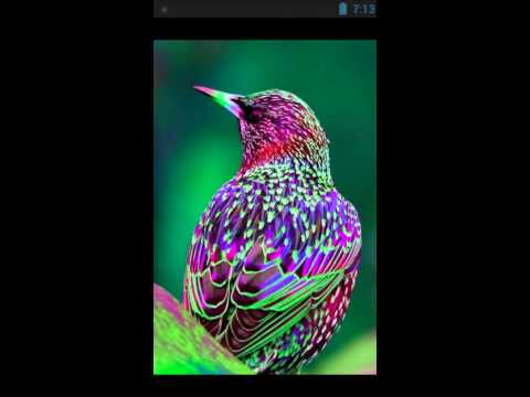 Картинки про птиц