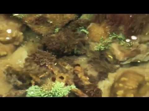 Angra Dos Reis Travel Video