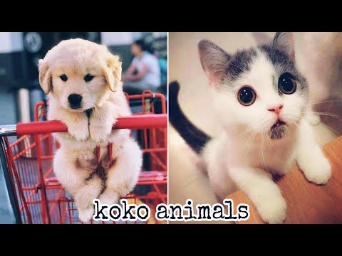 cuTe cat - Cute and Funny Baby Cat and dog Videos Compilation #40    koko animals