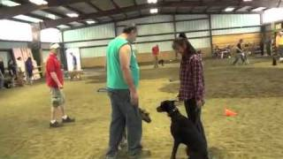 Sit Means Sit Cleveland-akron Canine Good Citizen Training Preparation #1