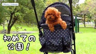 9月26日、TaruちゃんとRasuくんで、近所の公園へ出掛けました   Rasuく...
