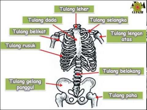 penanganan sakit tulang belakang // pelatihan dosen uns.