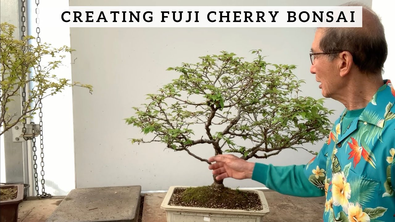 Creating Fuji Cherry Bonsai Youtube
