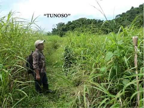 """""""Jwal sulul li'be!"""" Exploring the Muddy Path of Conservation and Development in Central America"""