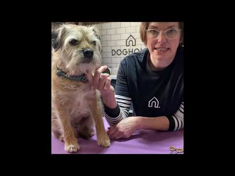 How to Trim Your Dog's Face Safely from Home | Advice from a Professional Groomer